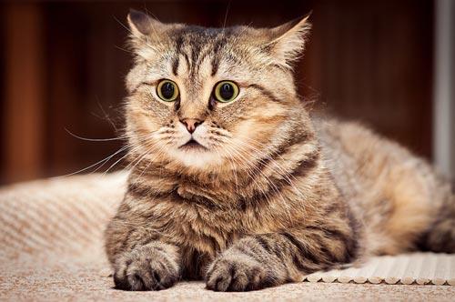 عکس های جالب و دیدنی گربه های ناز