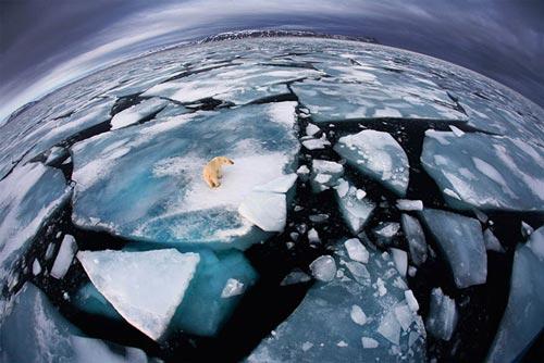 عکس های ناب دیدنی از خرس های قطبی و جنگلی