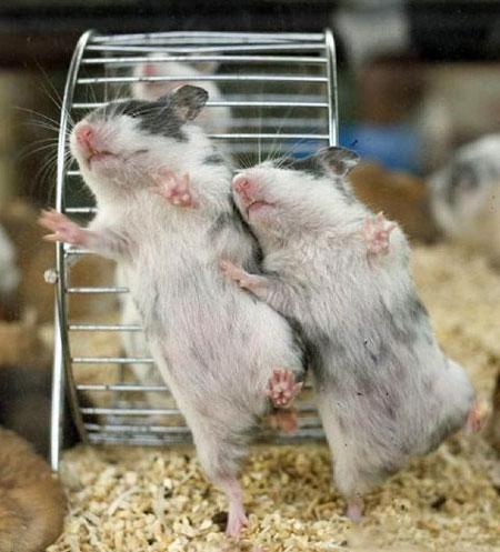سری جدید عکس های بامزه و خنده دار حیوانات