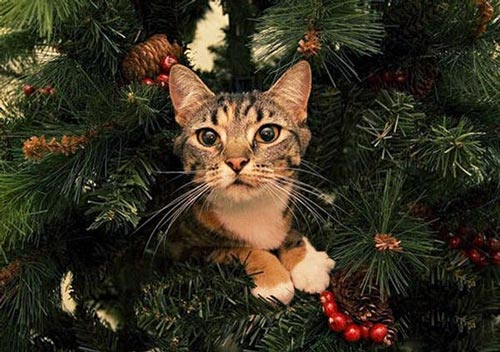 تصاویر بامزه از گربه ها در درختان کریسمس 2015