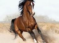 دنیای جالب اسب ها