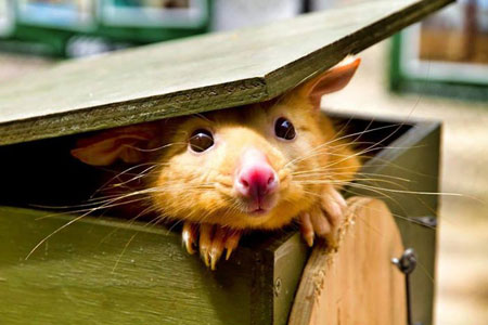 سری جدید ع های بامزه و خنده دار حیوانات