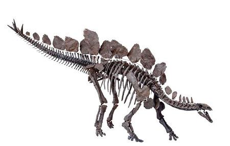 نمونه اسکلت یک دایناسور دانشمندان دنیا را شوکه کرد +عکس