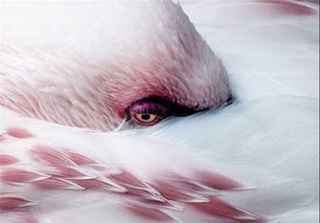 عکس های جالب و دیدنی از طبیعت و حیاتوحش در سال 2014