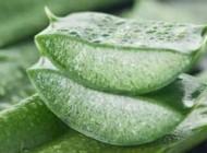 ۵ غذای گیاهی مناسب برای از بین بردن سوءهاضمه