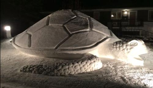 لاکپشت برفی غول آسا +عکس