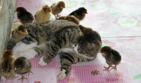 عکس های خنده دار و بامزه از حیوانات
