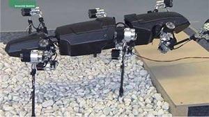 ساخت «ربات حشره» برای تحقیق بر روی حشرات +عکس