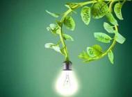 تولید انرژی برق از گیاهان زنده