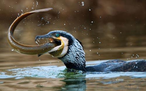 لحظات دیدنی دنیای شگفت انگیز حیوانات +عکس
