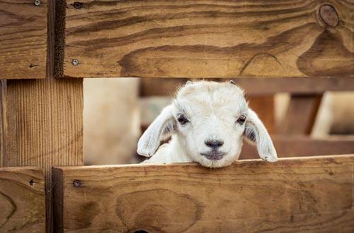 عکس های دیدنی و تماشایی حیوانات
