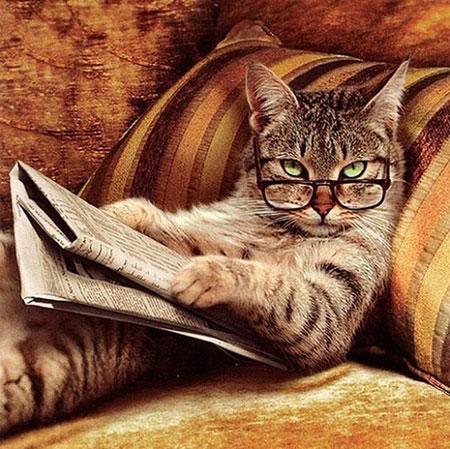 عکس های جدید بامزه و باحال حیوانات