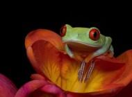 چشم اندازهای جالب رنگارنگ از سراسر جهان