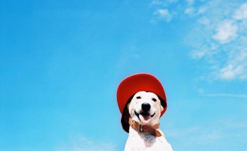 عکس هایی جالب از ژست های سگی با لبخند