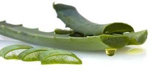 تأثیر مفید نکتار گیاه آگاو در بهبود سرفه کودکان