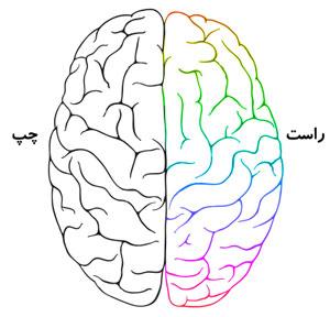 طالع بینی جالب نیم کره های مغز