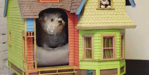 خانه جالب و زیبای یک سگ بامزه +عکس