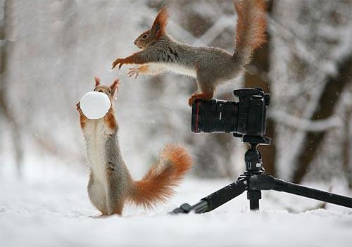 عکس های جالب ساخت آدم برفی توسط سنجاب ها