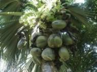 درختی اسرار آمیز که دانشمندان را به فکر فرو برد! +عکس