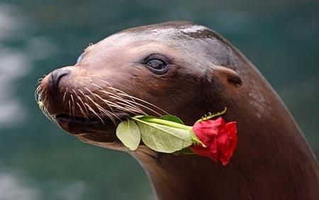 عکس های جالب دنیای رمانتیک حیوانات !