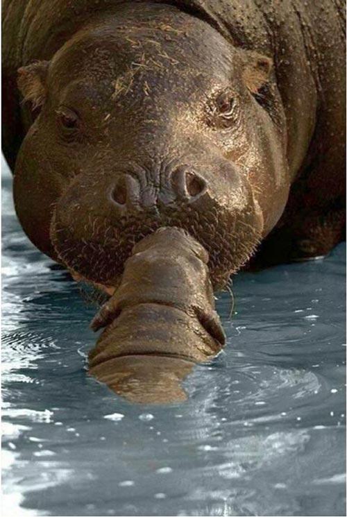 عکس های جالب بوسه عاشقانه حیوانات