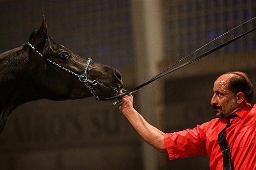 اسبی به قیمت 3 میلیاردتومان درایران! +عکس