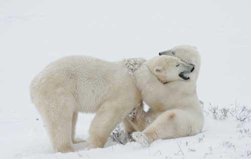 عکس های جالب و دیدنی از ابراز عشق در حیوانات