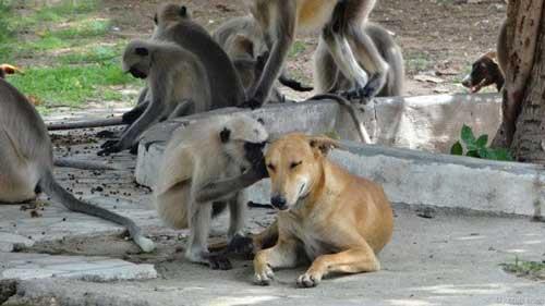 تصاویر خارق العاده از تقابل حیوانات