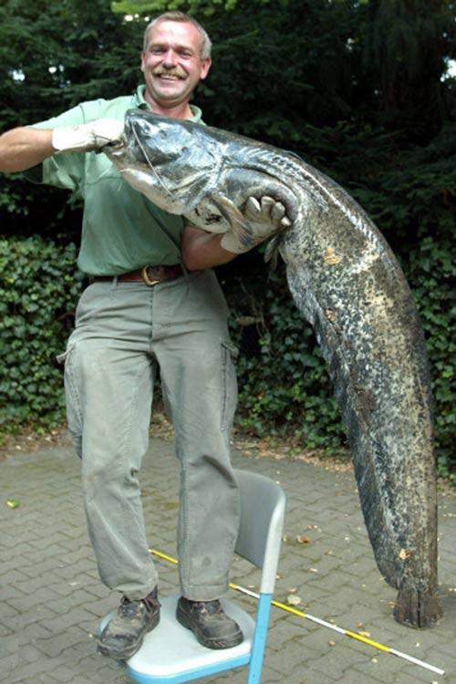 غول آساترین ماهی هایی که تا به حال صید شده اند +عکس