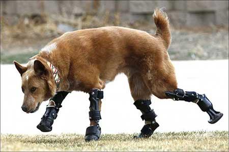 زمانی که حیوانات جراحی می کنند!