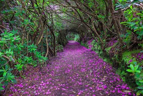 عکس های دیدنی مسیرهای رویایی برای پیاده روی