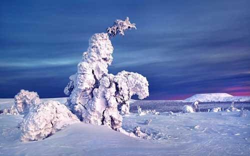 عکس های جالب و دیدنی درختان پوشیده از برف