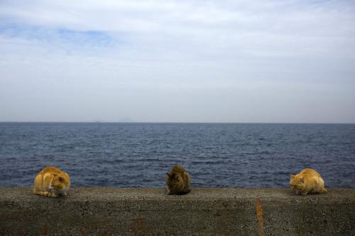 عکس های دیدنی جزیره گربه ها در جنوب ژاپن