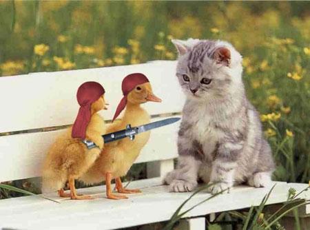 جدیدترین عکس های باحال خنده دار و طنز