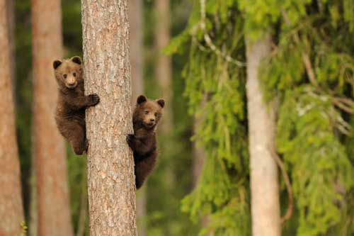 عکس های جالب و دیدنی از دنیای خرس ها