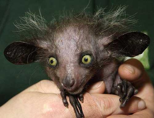 عکس های باورنکردنی حیوانات عجیب و غریب !!!