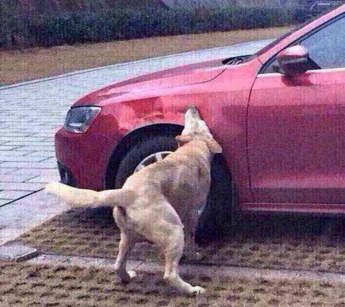 انتقام گرفتن به روش سگی +عکس