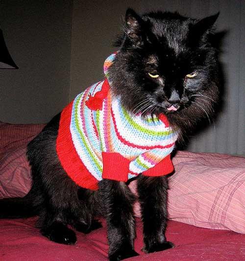 مدل های جالب لباس گربه ها +عکس
