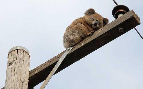 عکس های دیدنی حیوانات از لحظه خواب !!!