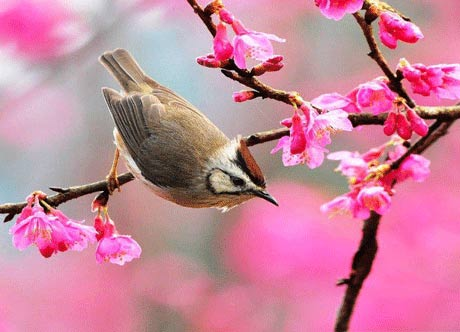 عکس های دیدنی پیش زمینه زیبای بهاری
