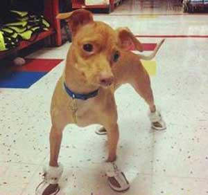 عکس های خنده دار زشت ترین سگ دنیا!