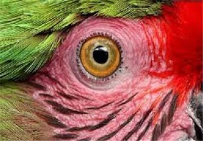 عکس هایی جالب از نمای نزدیک چشم حیوانات