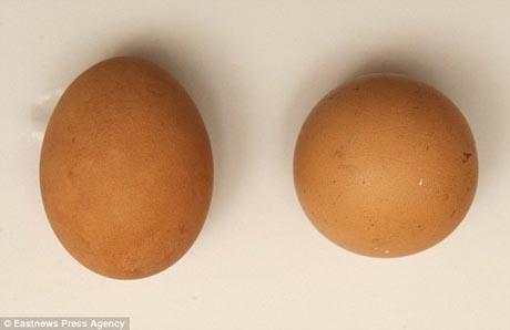 تخممرغی به ارزش 2.5 میلیون تومان!  عکس