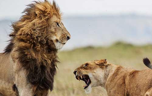 عکس های جالب اختلافات زناشویی سلطان با همسرش