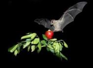 خطرناک ترین سلاح های زیستی جهان +عکس
