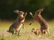 عکس های جالب و بامزه خرگوش ها