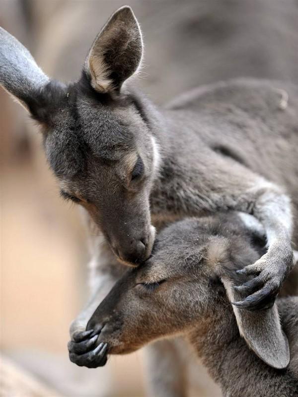 تصاویر عشق بازی حیوانات