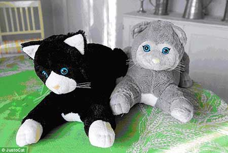 گربه های عروسکی زد آلزایمر