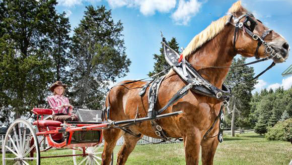 تصویر اسبی زیبا با وزن 1180 کیلو