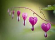 عکس های خارق العاده زیبا و دیدنی عاشقانه